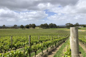 Adelaide Hills Private Tour